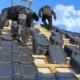 Neubau Dacheindeckung